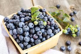 Blueberry, Buah Kecil Yang Kaya Antioksidan